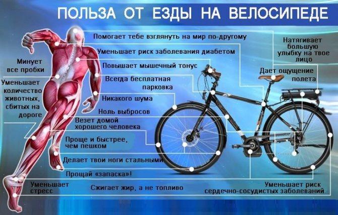 Сколько калорий сжигается при катании на велосипеде?