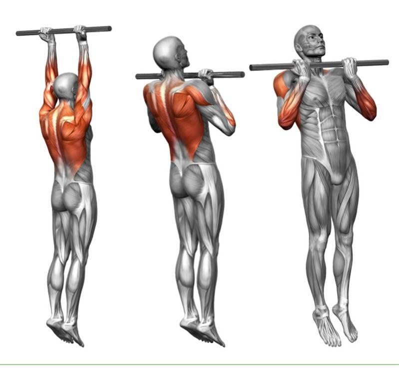 Подтягивания параллельным хватом: какие мышцы работают, польза нейтрального хвата