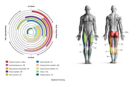 Как велосипед меняет массу тела и объем ног - bikeandme.com.ua
