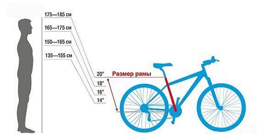 Как подобрать велосипед по росту ребенка, таблица размеров рамы
