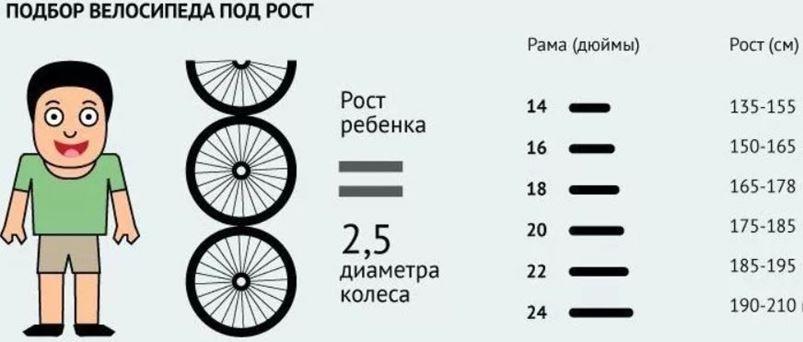 Как выбрать детский двухколесный велосипед: таблица размеров по росту и возрасту