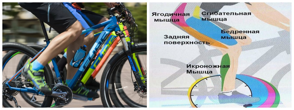 Какие мышцы работают при езде на велосипеде - livelong