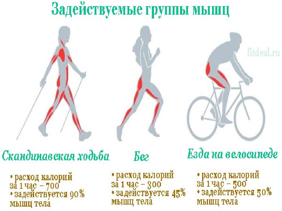 Эффективность сжигания калорий, что лучше: бег или велосипед | сайт котовского
