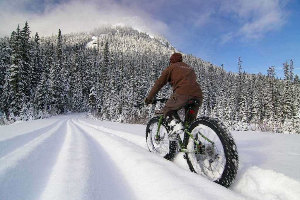 В какое время года выгоднее всего приобрести велосипед