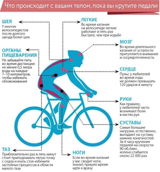 Польза велосипедных прогулок при сердечно-сосудистых заболеваниях. какой оптимальный пульс при езде на велосипеде и почему это важно