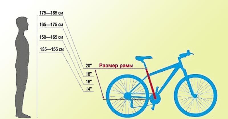 Длина окружности колеса велосипеда -таблица. размеры велосипедных колес, методы измерения диаметра колес