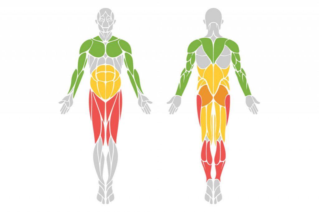 Какие мышцы работают при катании на велосипеде | советы | veloprofy.com