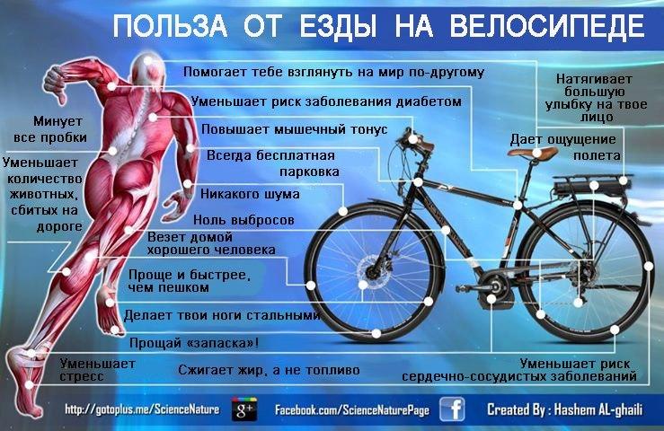 Чем полезна езда на велосипеде для женщин, фото – польза при проблемах с похудением