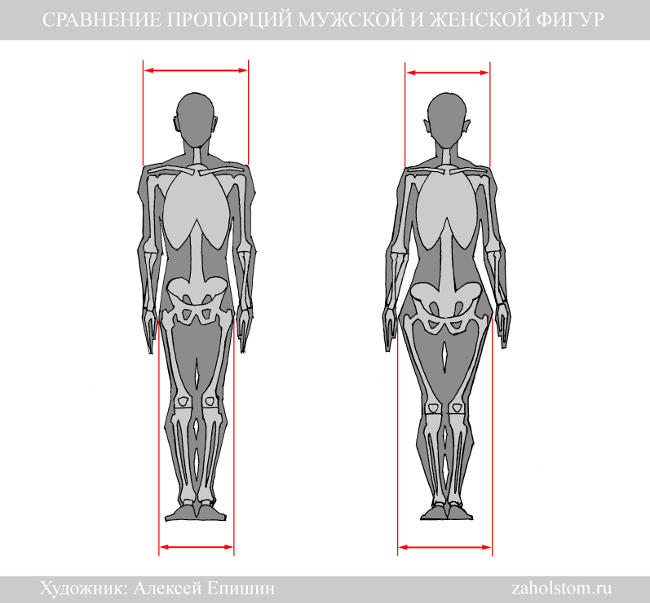 Как отличить женский велосипед от мужского: особенности, размеры и рекомендации