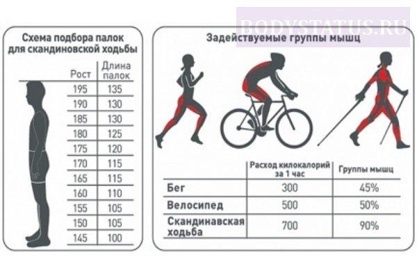 ✅ сколько нужно проезжать на велосипеде в день - veloexpert33.ru
