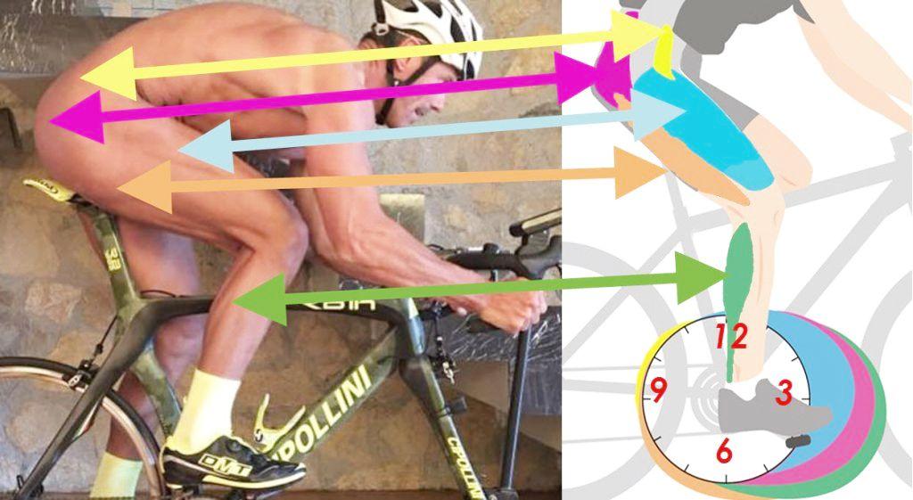 Какие мышцы работают при езде на велосипеде: разбираемся подробно [2019]