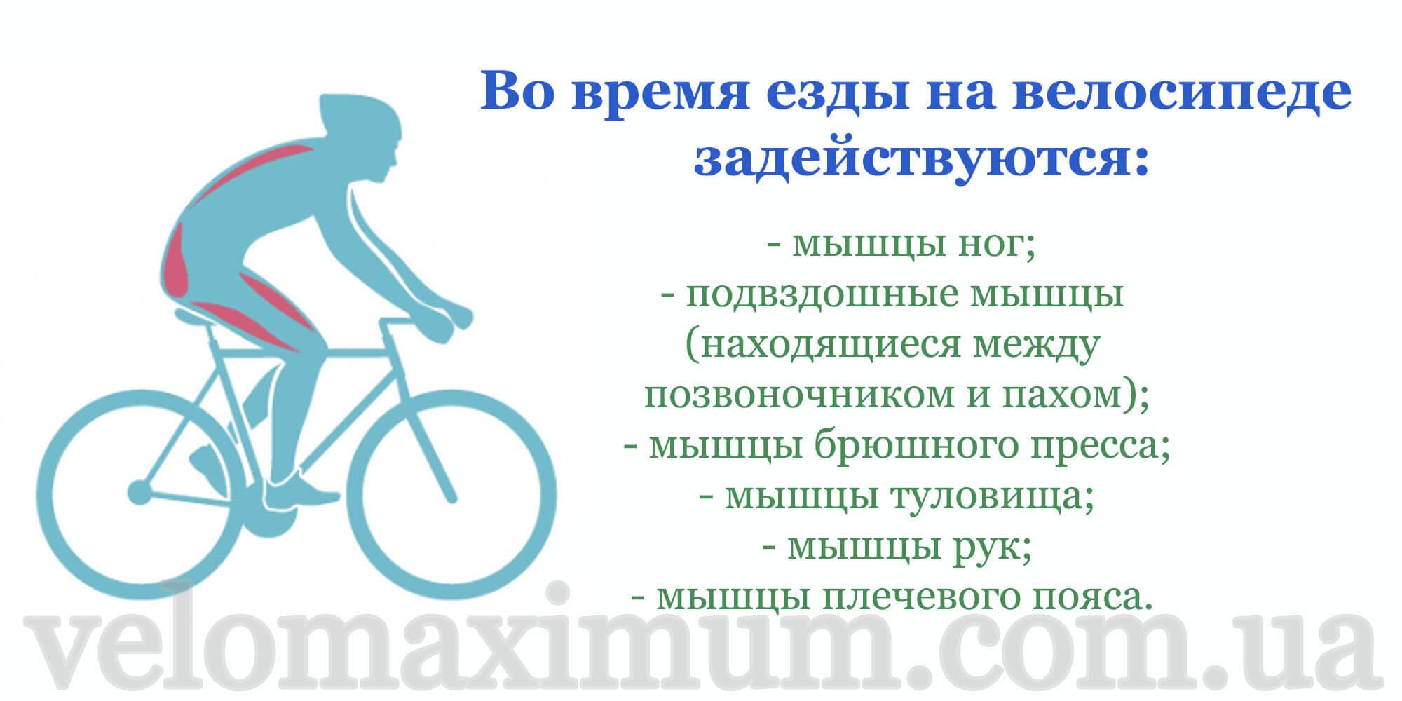 Польза велосипеда для мужчин— почему велосипед полезен именно для мужчин