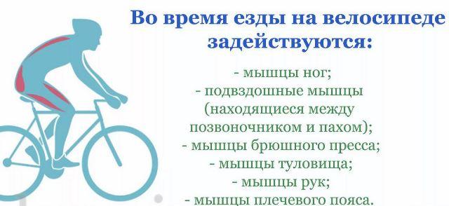 Стоит ли кататься на велосипеде, когда заболел - bikeandme.com.ua