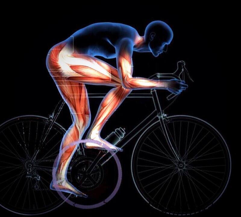 Езда на велосипеде: какие мышцы работают во время катания и нагрузки