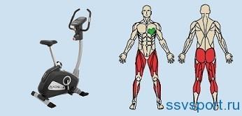 Тренировка мышц с помощью велосипеда