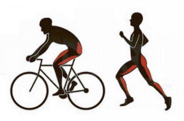 Эффективность сжигания калорий, что лучше: бег или велосипед