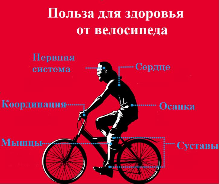 Бег или велосипед— что лучше для здоровья и похудения?